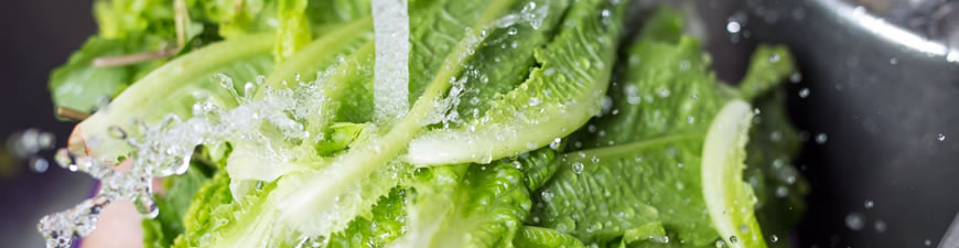 E. coli Water Test Kits